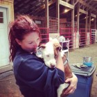 From Feral Pit Bull to Family Dog Thanks to The Devoted Barn