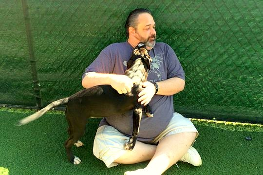 9.24.14 - Help Needed to Find Man Who Tossed Puppy over Fence1
