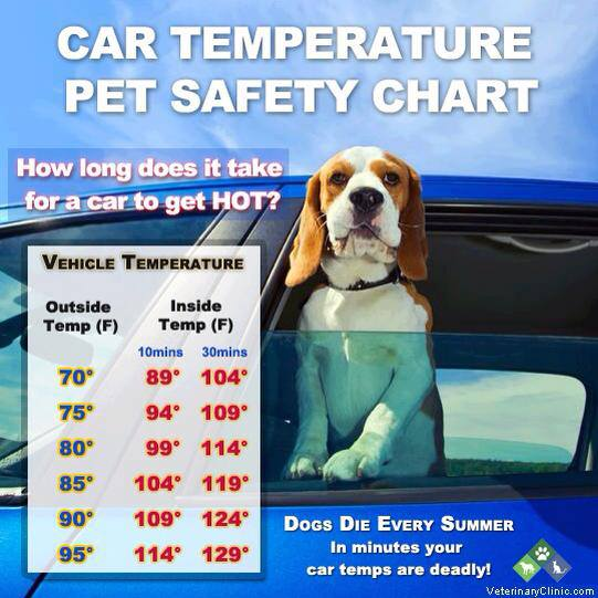What Texas City Lessens Punishment For Leaving Dogs In Hot Cars