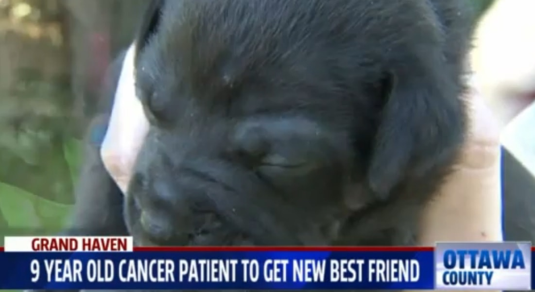 Animal Rescue in Michigan to Donate Puppy to Sick Girl