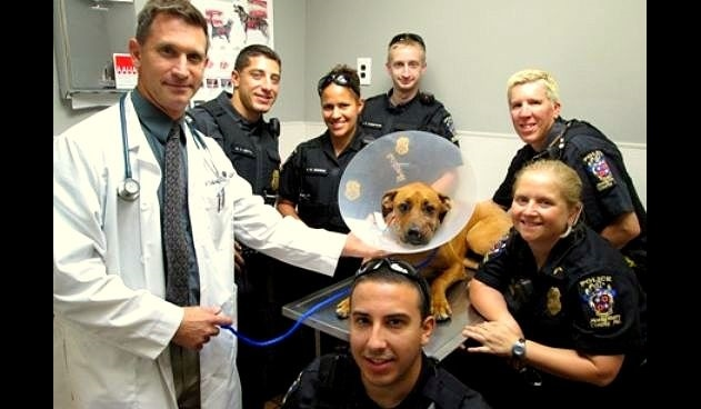 Police Officers Paying Medical Bills of Dog They Saved