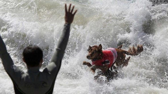 9.30.14 - Doggie Surfing Contest held in Huntington Beach2