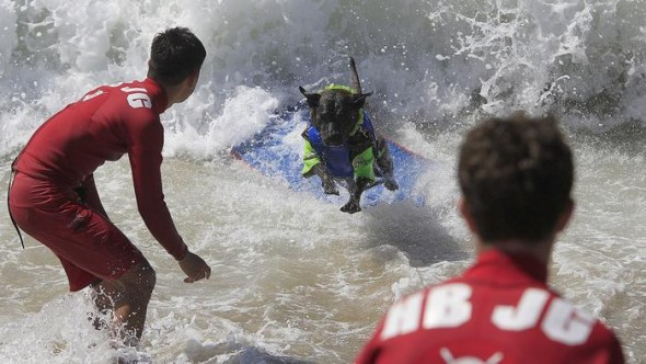 9.30.14 - Doggie Surfing Contest held in Huntington Beach6
