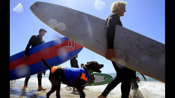9.30.14 - Doggie Surfing Contest held in Huntington Beach7