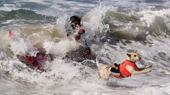 9.30.14 - Doggie Surfing Contest held in Huntington Beach8