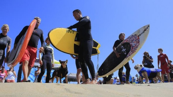 9.30.14 - Doggie Surfing Contest held in Huntington BeachFEAT