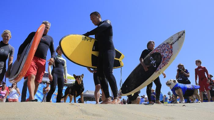Doggie Surfing Contest held in Huntington Beach, California