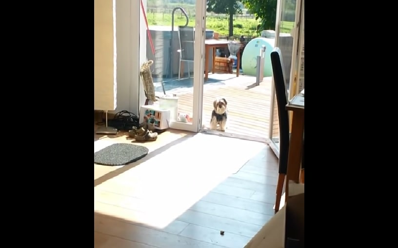 This Silly Little Guy Refuses to Enter Until He Knows Door is Opened