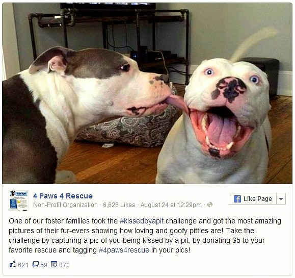 9.4.14 - Rescue Dogs Give the Best Kisses1
