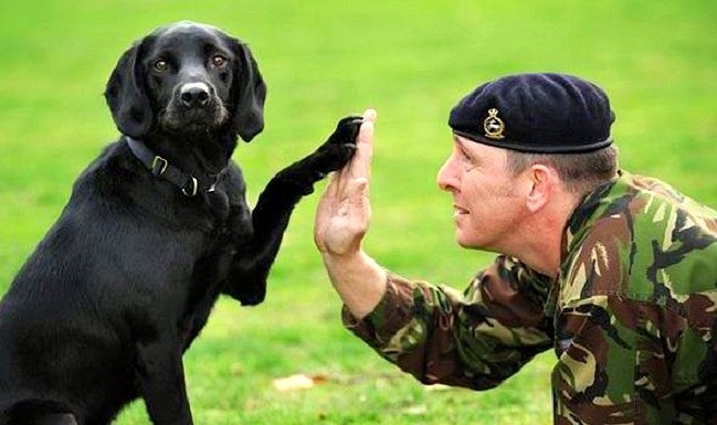 Popular Soldier Army Adorable Dog - 9  Snapshot_947152  .jpg