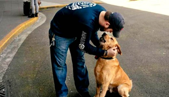Sgt. Deano Miller and Thor's happy reunion at the Sea-Tac Airport.