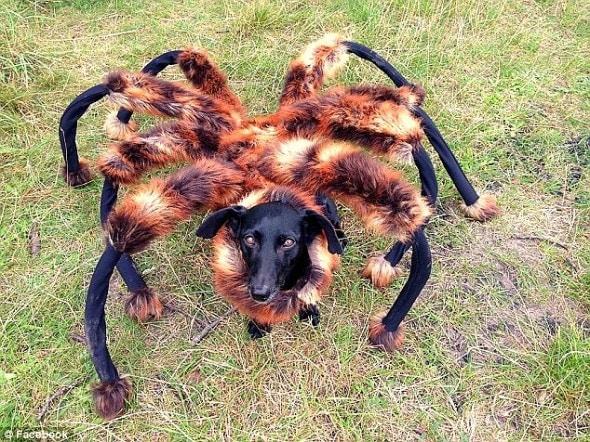 9.5.14 - Spiderdog1