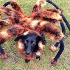 Spiderdog Terrorizes the Streets of Poland!