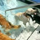 Annual Doggie Swim Day
