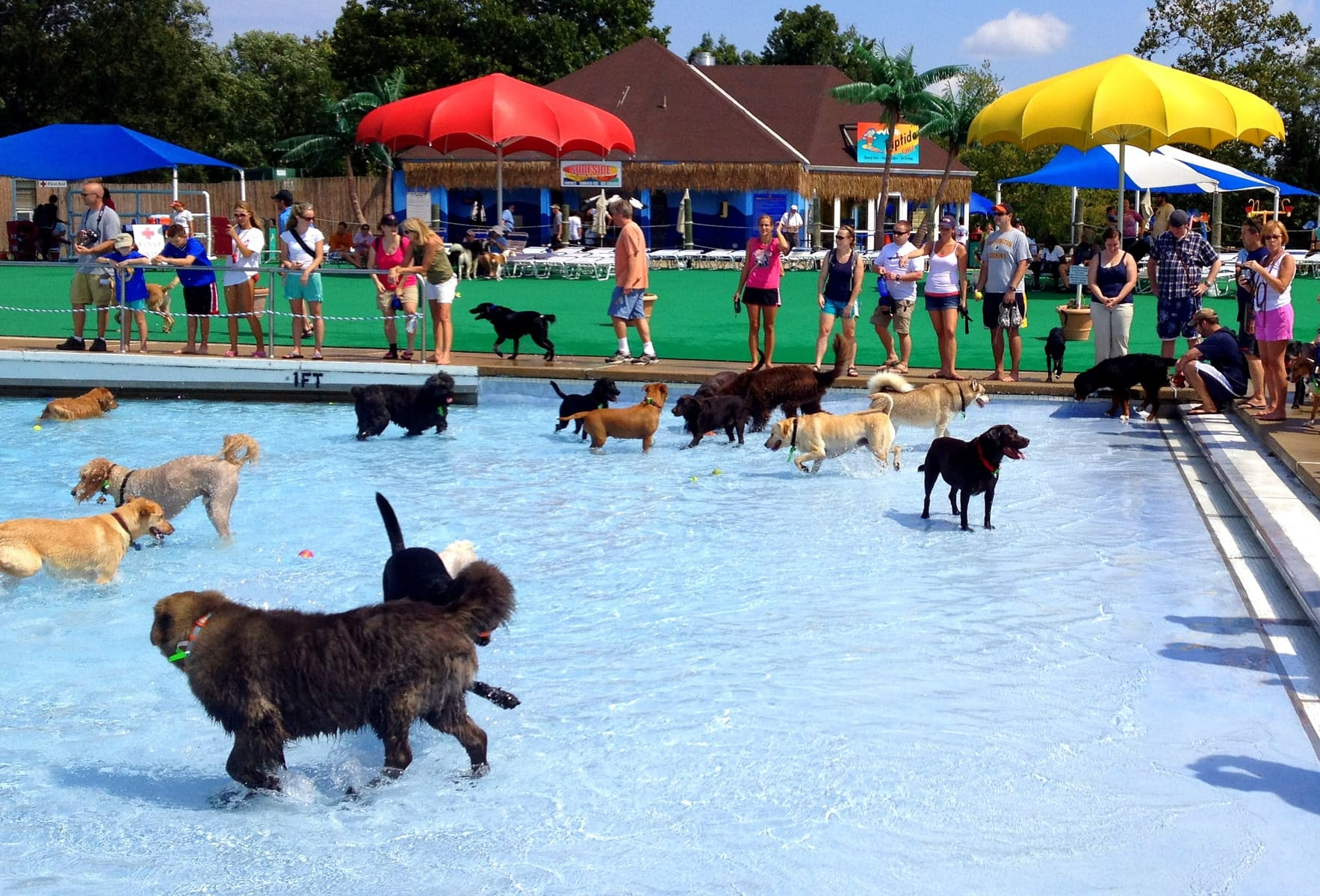 Annual Doggie Swim Day
