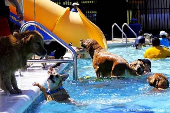 9.7.14 - Annual Dog Swim Day5