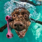 Seth Casteel's New Book Underwater Puppies