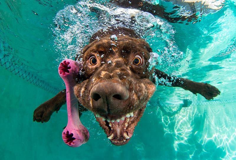 Seth Casteel's New Book Underwater Puppies