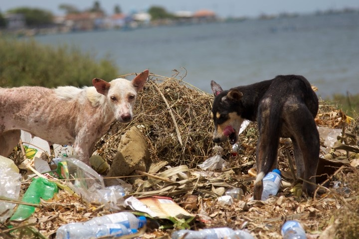 Organization Combating Dog Overpopulation in Sri Lanka