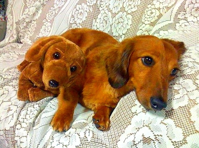 18 dogs and their stuffed animal doppelgangers. Black Bedroom Furniture Sets. Home Design Ideas