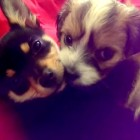 10.1.14 - Puppies Love Snuggling1
