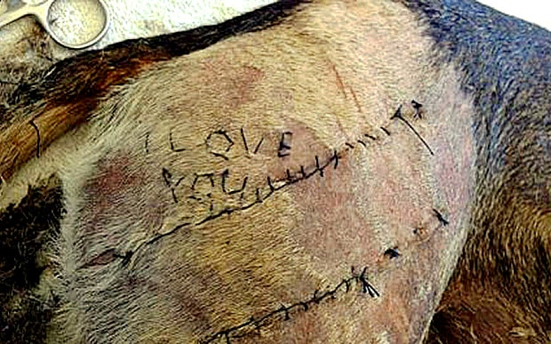 "Vet Student Investigated for Stitching ""I Love You"" onto Dog's Skin"