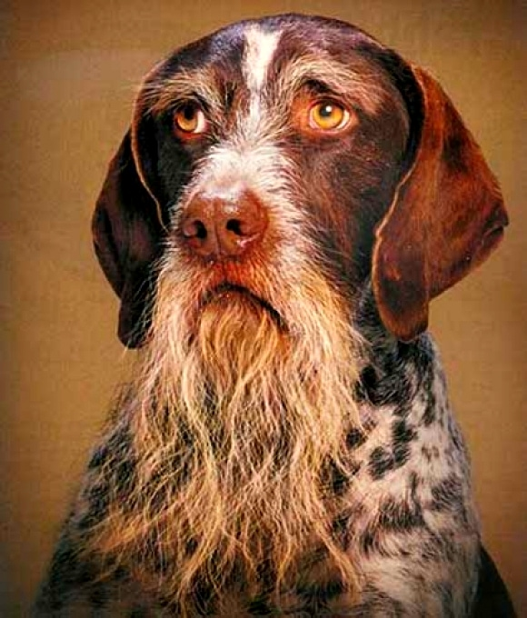 Dog Behavior At  Years Old