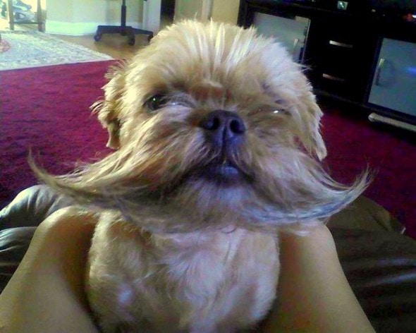 10.10.14 - Dogs with Really Funny Facial Hair16