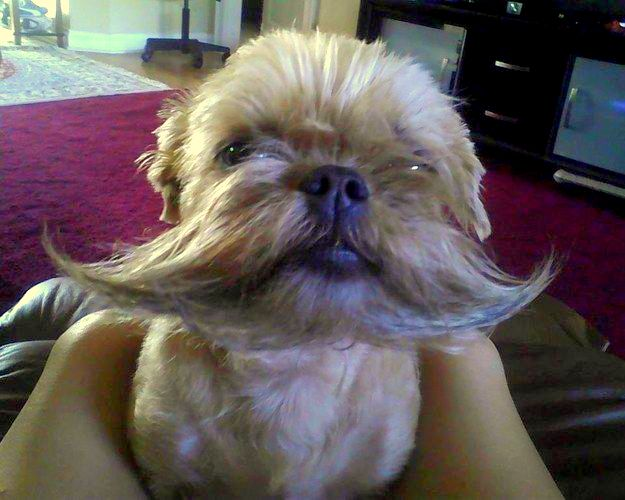 25 Pets With Hilarious Facial Hair Life With Dogs