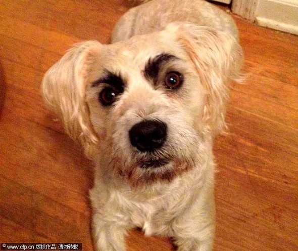 10.10.14 - Dogs with Really Funny Facial Hair23