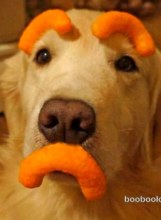 Funny Dog Food Pics