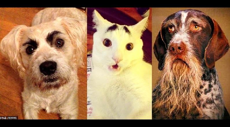 25 Pets with Hilarious Facial Hair