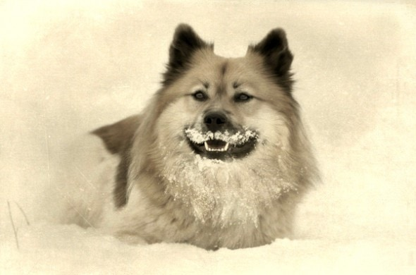 10.10.14 - Dogs with Really Funny Facial Hair3