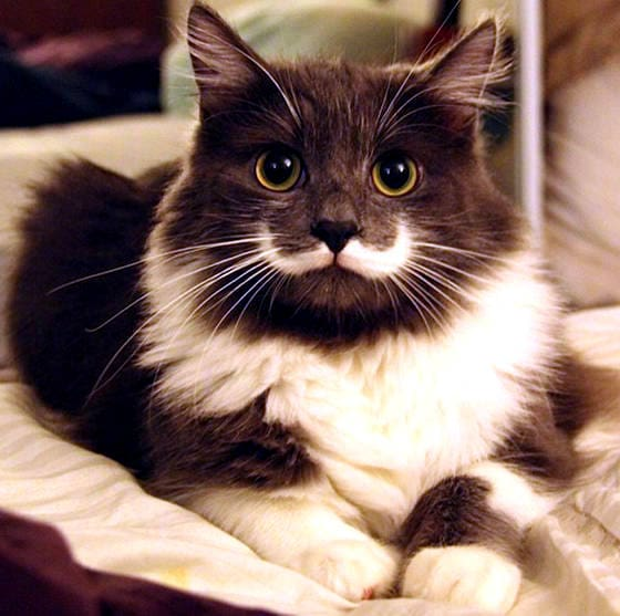 10.10.14 - Dogs with Really Funny Facial Hair5