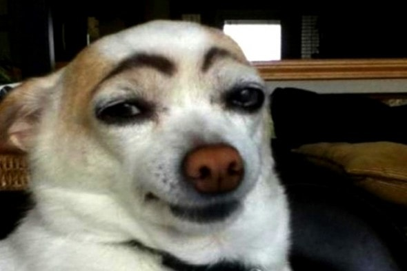 10.10.14 - Dogs with Really Funny Facial Hair6
