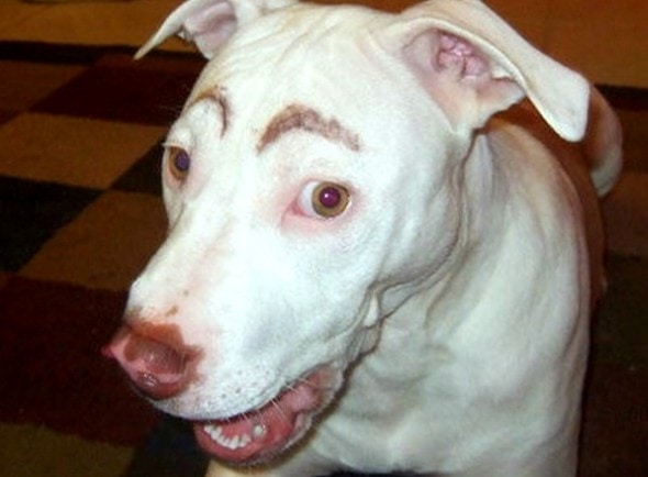 10.10.14 - Dogs with Really Funny Facial Hair8