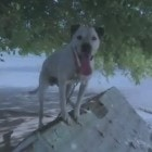 10.2.14 - Dog is Missing after Caretakers are Accused of Mistreatment