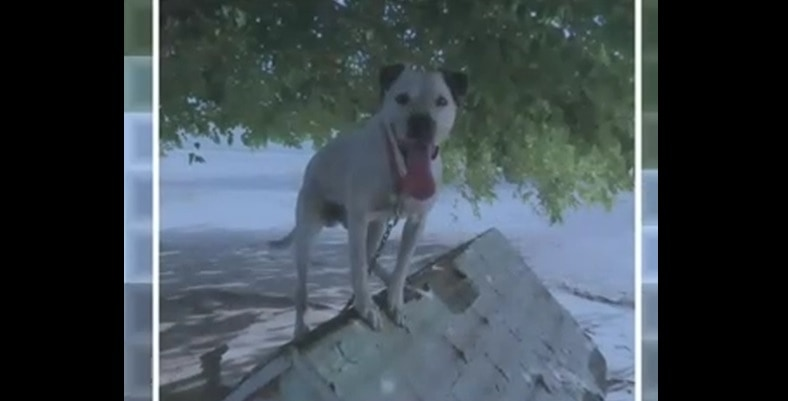 Dog is Missing after Caretakers are Accused of Mistreatment
