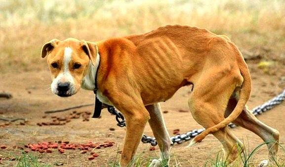 FBI Makes Animal Cruelty a Top-Tier Felony