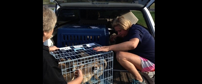 Puppy Mill Raid in Jackson County, West Virginia