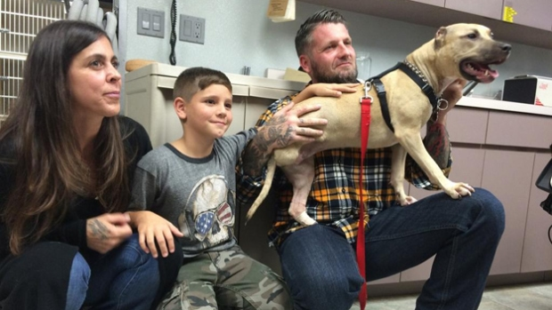 Abused Pit Bull Finds New Home With Loving Family