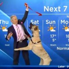 Weather Dog Totally Steals the Show!