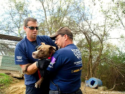 10.23.14 - 50 Dogs Rescued in Fighting Bust1