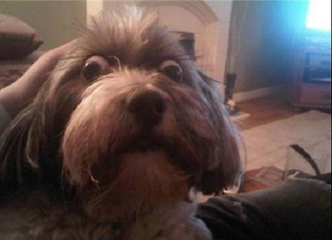 10.23.14 - Dogs' Facial Expressions12