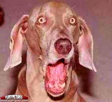 Dogs making the most hilarious faces 102314 dogs facial expressions16 voltagebd Image collections