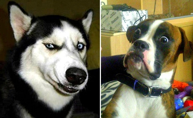 24 Dogs Making the Most Hilarious Faces