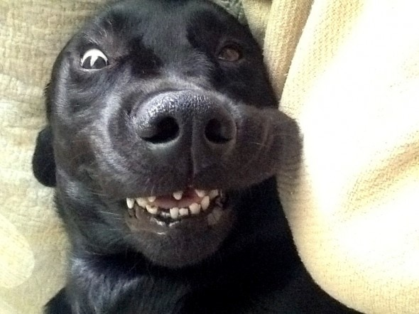 10.23.14 - Dogs' Facial Expressions3