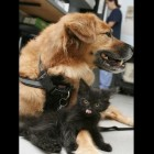 Dog Is Shelter Kittens' Newest Nanny