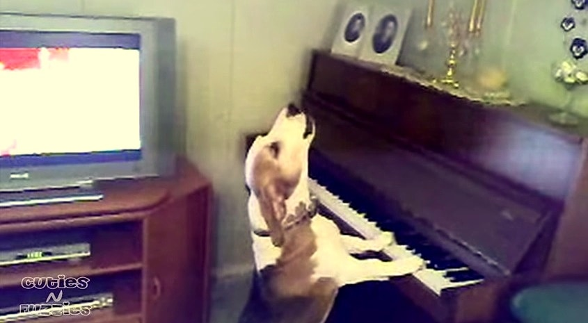 Talented Dog Sings and Plays Piano