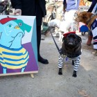 Tompkins Square Dog Costume Halloween Parade Highlights